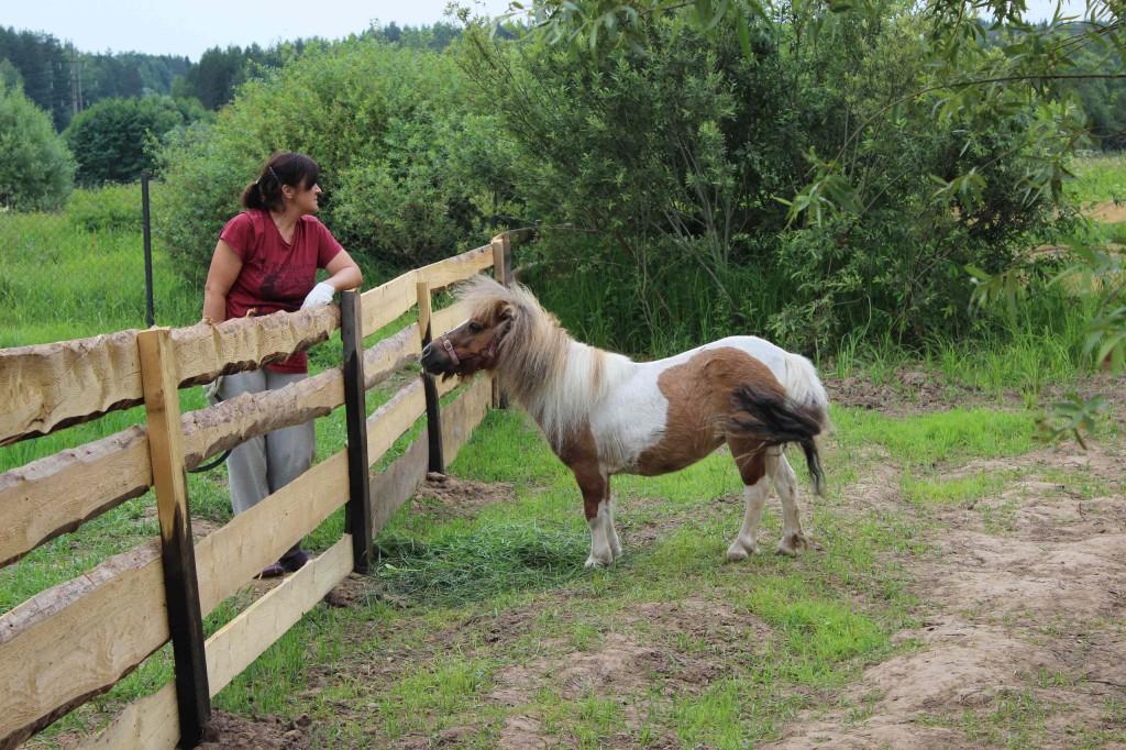 Зачем нормальному человеку мини-лошадь?