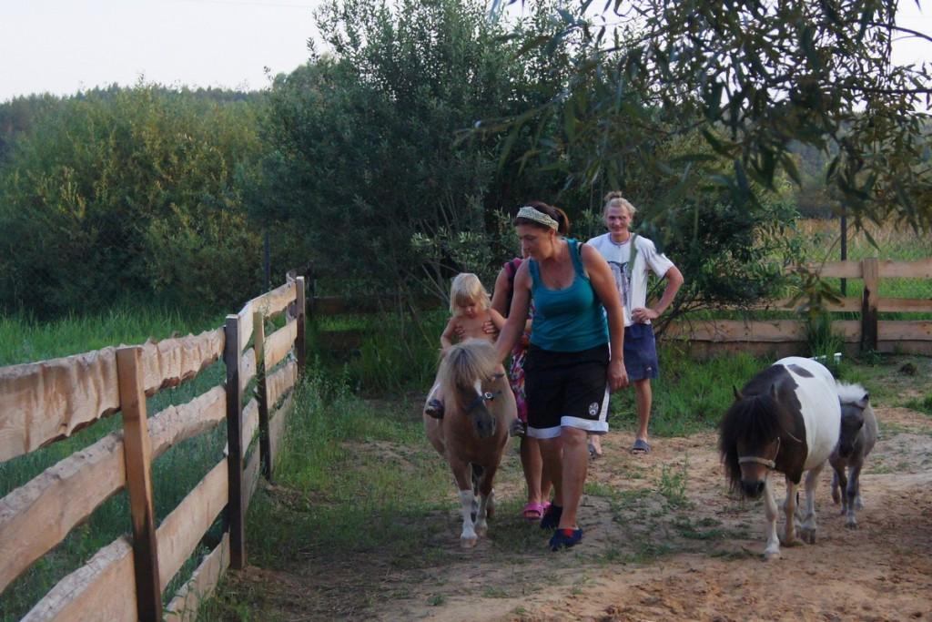 У нас вы можете приобрести очаровательную воспитанную мини-лошадку - лучшего друга и компаньона для жизни на на природе