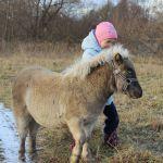 мини-лошадки хорошо ладят с детьми