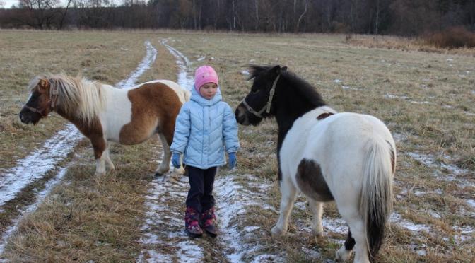 Питомник мини-лошадей LowRider приглашает Вас познакомиться и подружиться с нашими лошадками