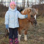 мини-лошадки очень покладистые и дружелюбные