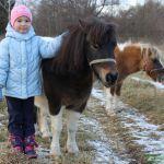 спокойный характер - отличительная черта миниатюрных пород лошадей