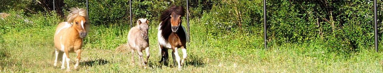 LowRider — питомник европейских мини-лошадей