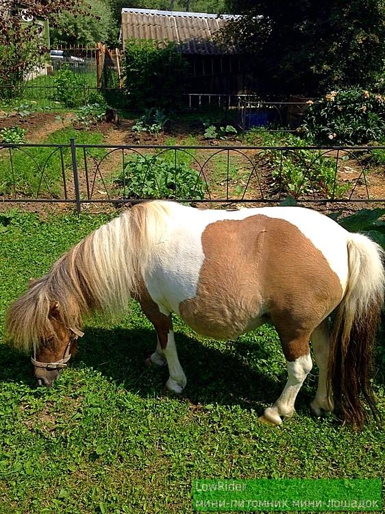 Очень беременная лошадка
