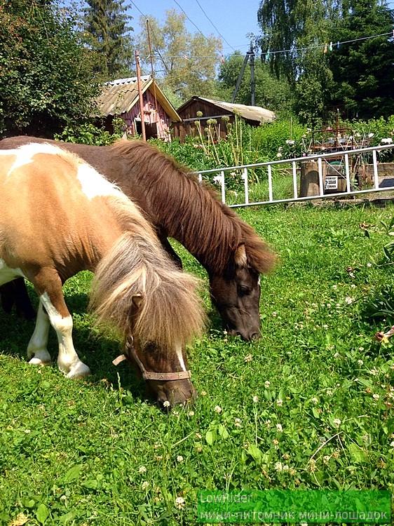 Мини-лошадки - лучшее украшение приусадебного участка )