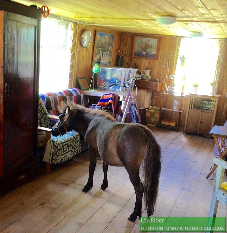 Лошадка, которая умеет ходить в гости